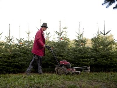 wortart - christbäume - mähen