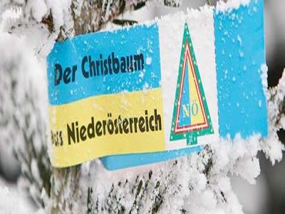 Noe_christbaumschleife_NA_5887_winterschleife