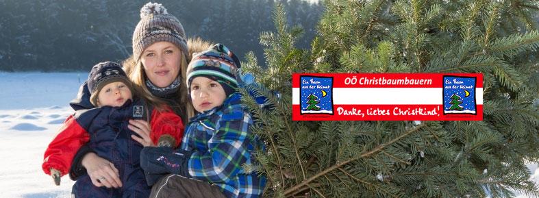 Weihnachtsbaum Selber Schneiden.Oberösterreich Weihnachtsbaum At