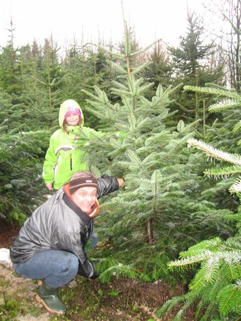 Weihnachtsbaum Selber Schneiden.Apfelhof Gatterbauer Weihnachtsbaum At