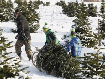 Mann_zieht_weihnachtsbaum_schnee