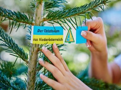 Noe_Christbaumschleife
