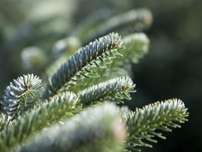 tannenbaum_zweig_MG_6371
