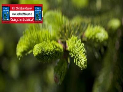 weihnachtsbaum_kaernten_bundesland