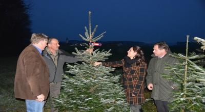 Weihnachtsbaum_neue_Schleife