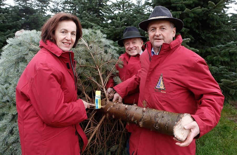österreich Weihnachtsbaum.Baum Fürs Eu Parlament Geschnitten Und 200 Jahre Christbaum In