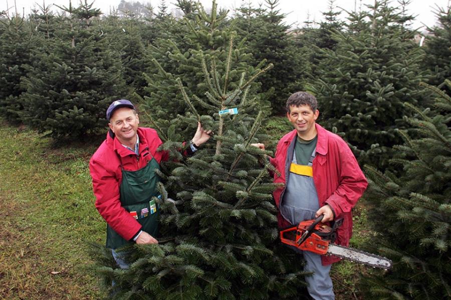 Wien Weihnachtsbaum Kaufen.Naturbäume Aus Christbaumkulturen Versus Lebendbaum Im Topf