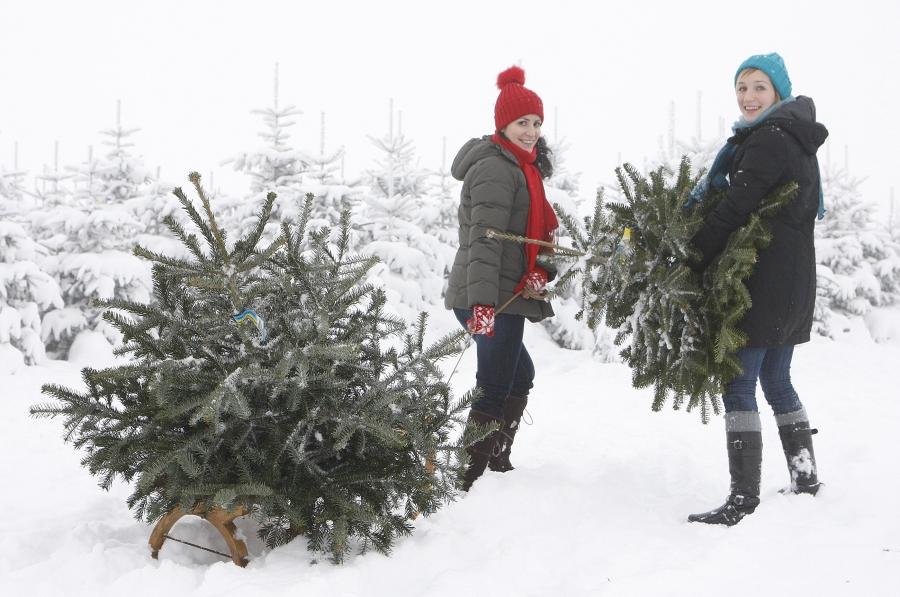 Wien Weihnachtsbaum Kaufen.Christbäume Mit Herkunftsgarantie Ab Hof Verkauf Hat Begonnen