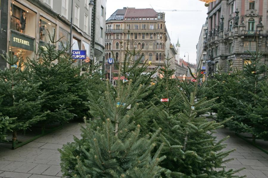 Wien Weihnachtsbaum Kaufen.Christbaumbauern Freuen Sich über Stabilen Umsatz Von über 50 Mio